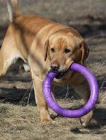 歐洲原裝│寵物訓練圈-寵物,寵物用品,寵物飼料,寵物玩具,寵物零食