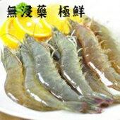 台灣超猛無毒白蝦