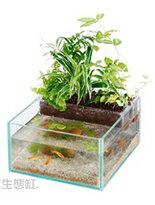 魚草生態缸-寵物,寵物用品,寵物飼料,寵物玩具,寵物零食